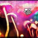 Come Essiccare Funghi e Tartufi Magici