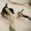 Come Essiccare Con Successo i Funghi Allucinogeni