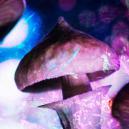 Tolleranza e Funghi Magici: Tutto Quello che Devi Sapere