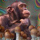 Cos'è la Teoria delle Scimmie Ebbre e Perché È Importante?