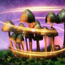 Come i Funghi Magici Sono Diventati Magici