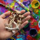 I Funghi Magici Possono Migliorare La Creatività?