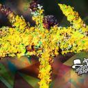 Scoperta una Nuova Specie di Licheni Allucinogeni