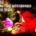 Le 25 Specie Più Comuni In Natura Di Funghi Contenenti Psilocibina